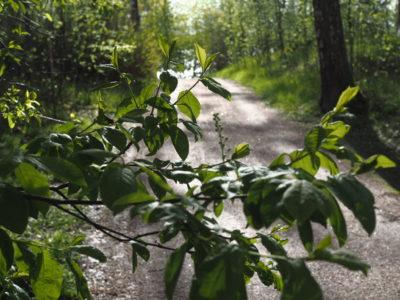 Kunnianhimo | Oivalluttajan blogi | Maarit Jantunen